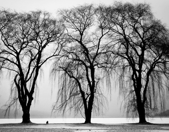 black-and-white-trees-winter-branches